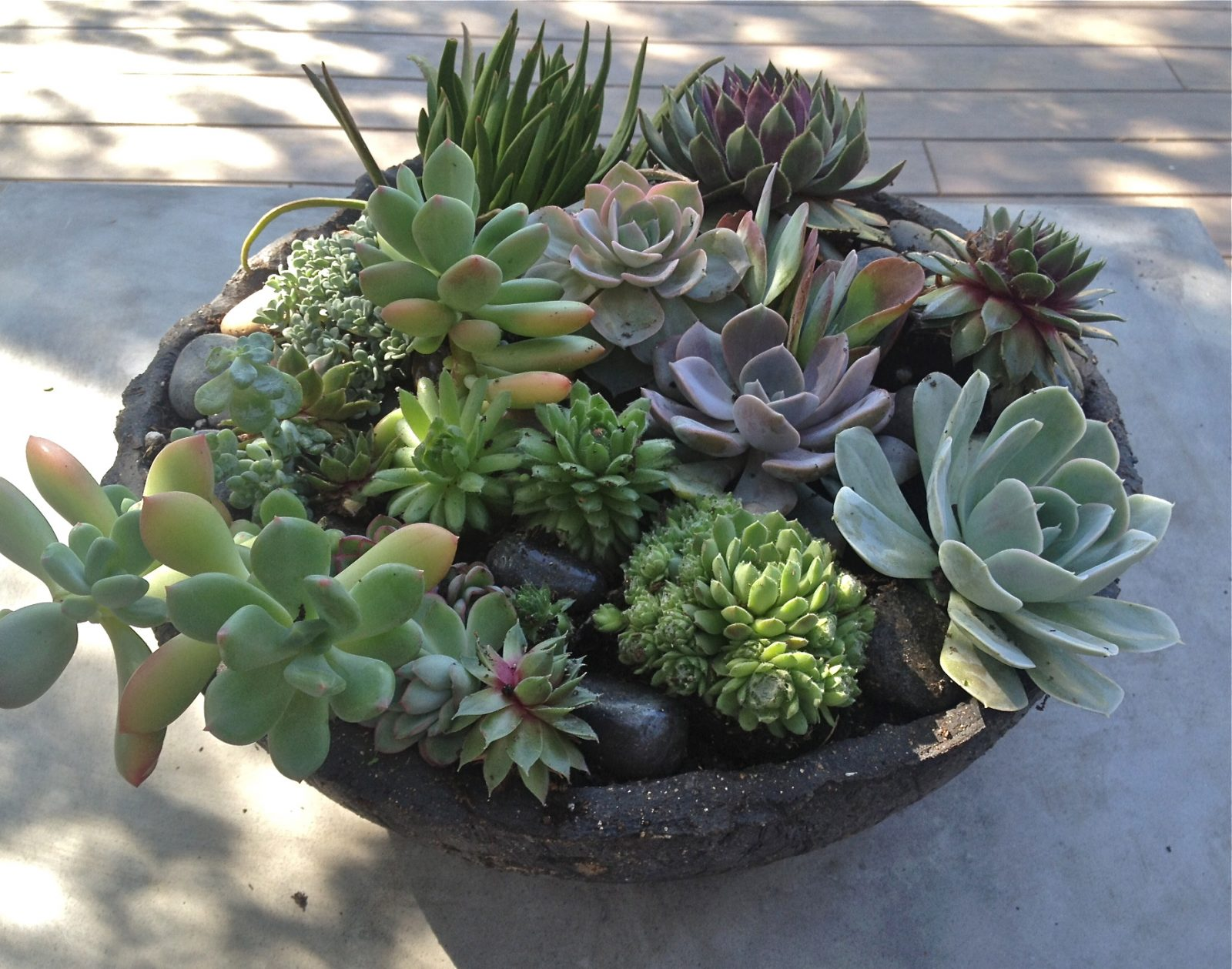 Succulents the simple proof for Garden arrangement of plants