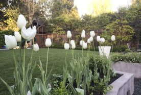 Fall Garden – Preparing for Spring Blooms