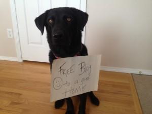 Blog, not Dog