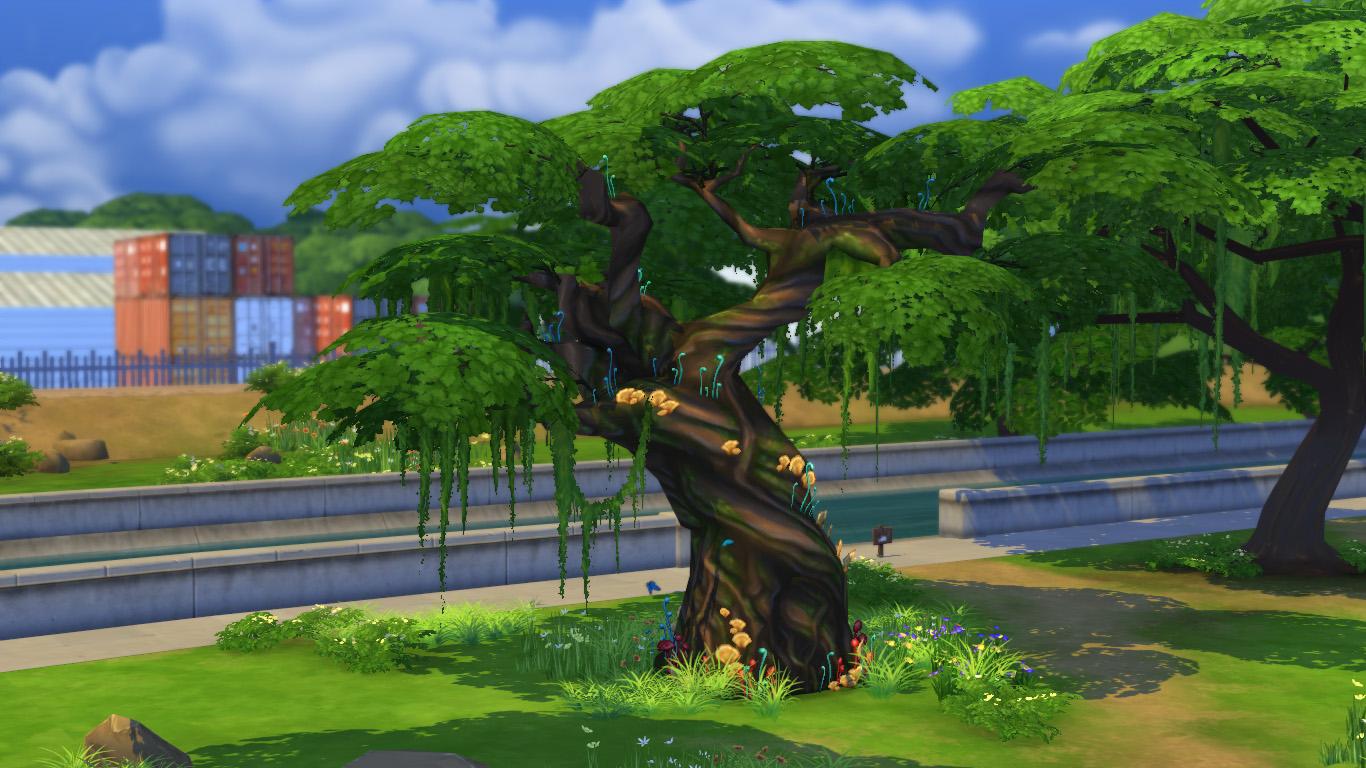 大树浇水简笔画