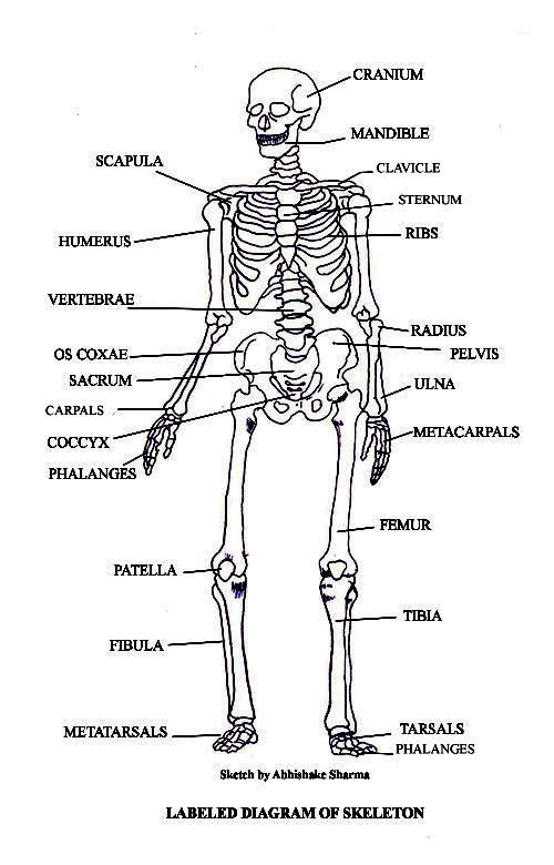 body diagram1