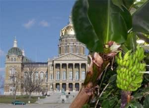 Iowa's Newest Crop