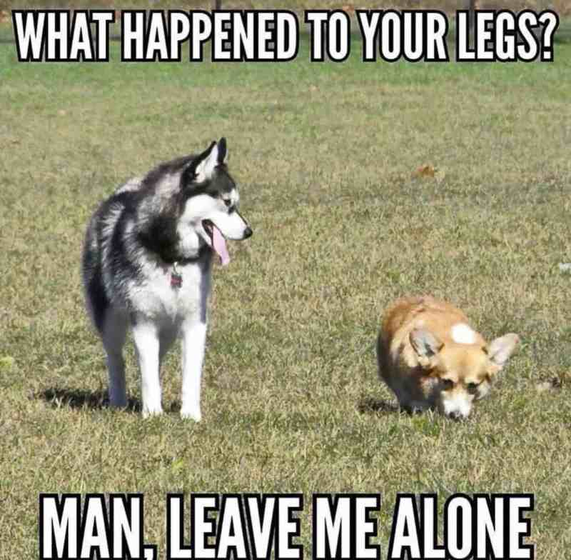 Graceful Internet Dog Dog Joke Meme Blank Bad Joke Dog Meme Generator What Happens When You Connect A Corgi To A Niest Dog Jokes Puns