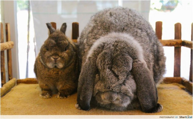 How much does resume rabbit cost