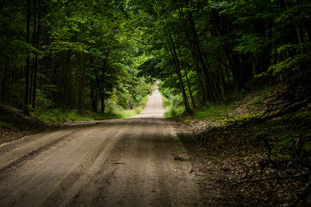 tree-lined-dirt-road