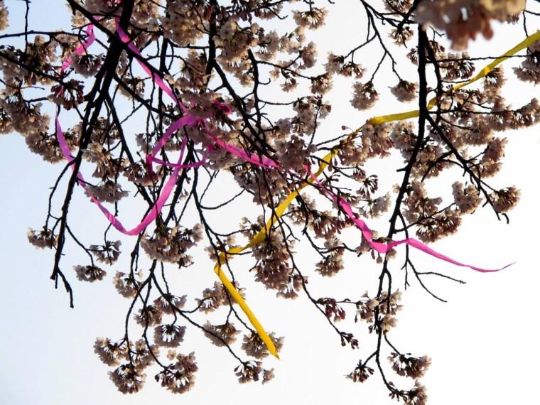 Seoul, Korea: Yeouido Cherry Blossom Festival