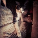 Meyo & Mae Sleeping