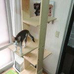 New Cat Climbing Tower