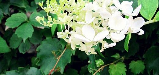 Paris Park Flowers