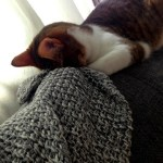 Mae, Cats Sleeping