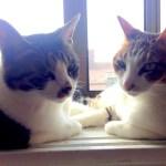 Meyo & Mae, Cats