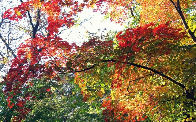 Seoul, Korea: Changdeok Palce The Secret Garden
