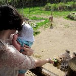 April On The Go: Zoo, me and baby feeding giraffe