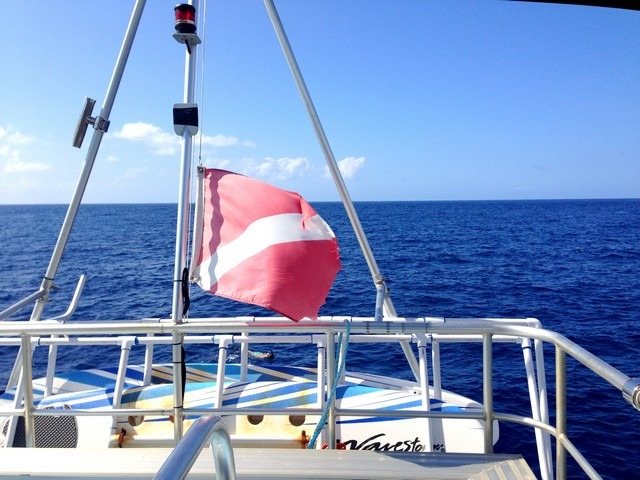 Neptune Charlies Ocean Safari, snorkel, Big Island, Hawaii, USA