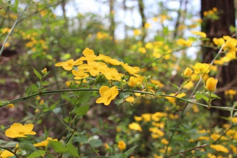 Ansan Mountain, Seodaemun-gu, Seoul, Korea, yellow flowers