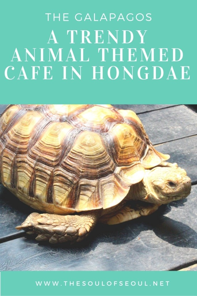 The Galapagos: A Trendy Animal Themed Cafe in Hongdae