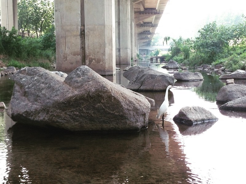 Hongje Stream, Mapo-gu, Seoul, Korea