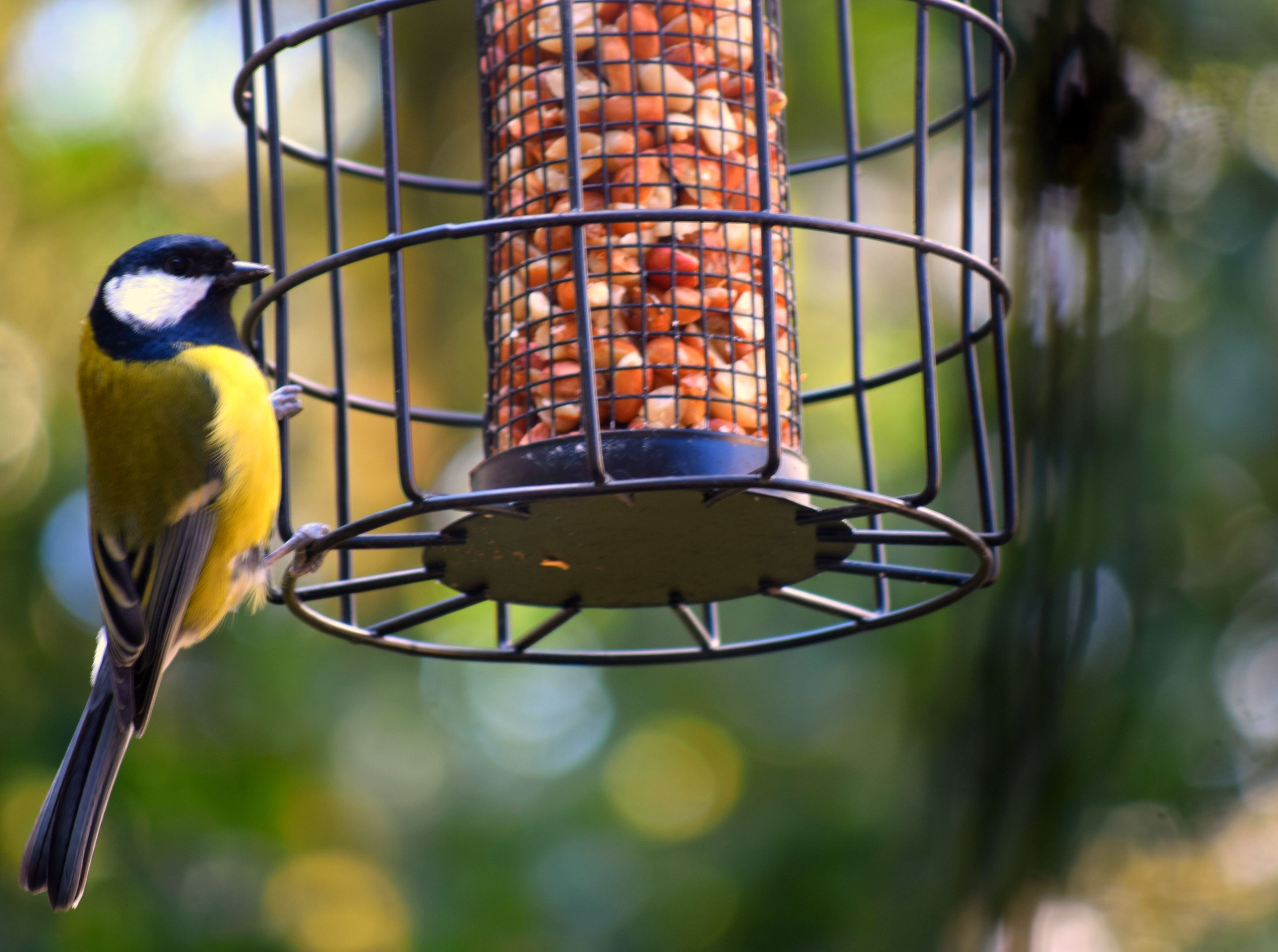 Home Staging Austin The 8 Best Squirrel-proof Bird Feeders Of 2019