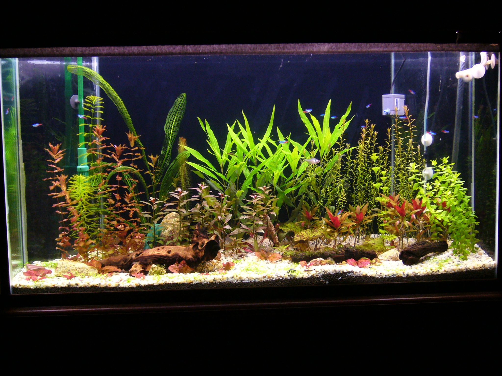 Aquarium Dekorieren Ideen Aquarium Plants Real Or Artificial