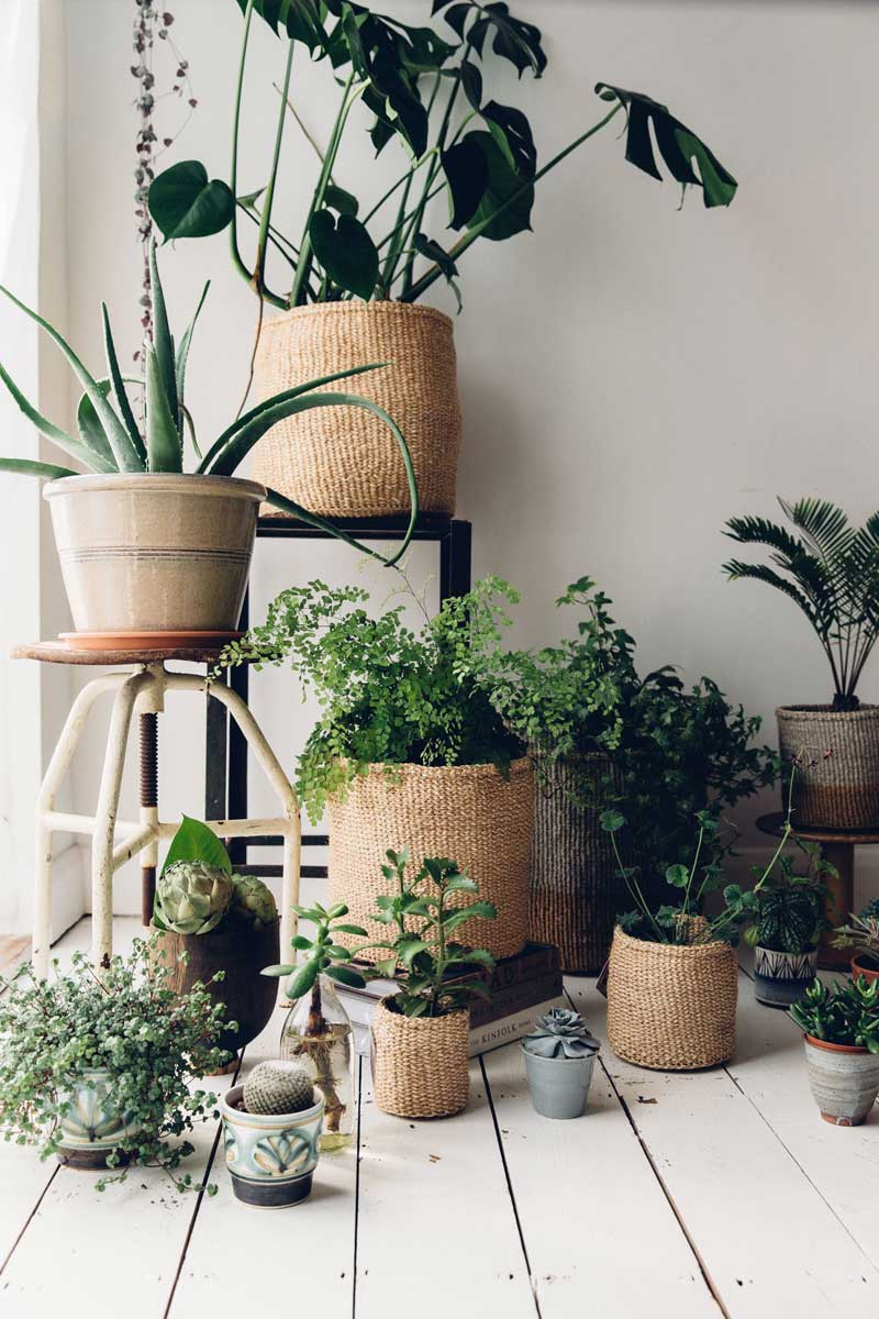 Wandrek Planten Botanisch Interieur Planten In Manden Thestylebox