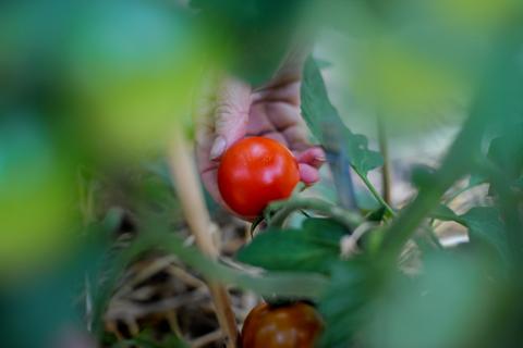 GardenJuly1-0852sm