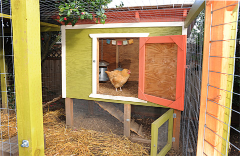in our last house we re purposed a corner of the separate garage for a coop but this time we started from scratch having lost hens to both raccoons and - Chicken Coop Design Ideas