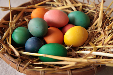 TN_eggs_color_480