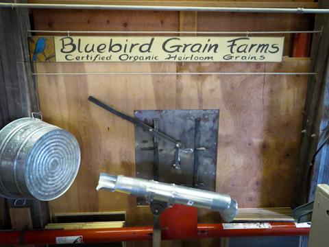 Bluebird480-5157