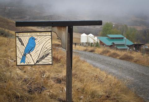 Bluebird480-5178