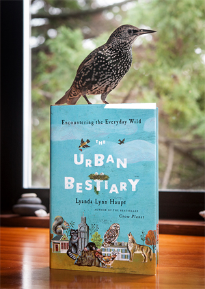 Urban Bestiary with Starling