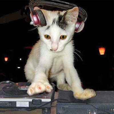 kitten on decks