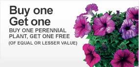 perennials coupon