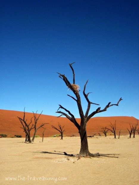 A dessicated tree in the Dead Vlei, Sossusvlei, Namibia