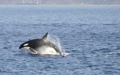 Tales of Whale Watching in Monterey Bay