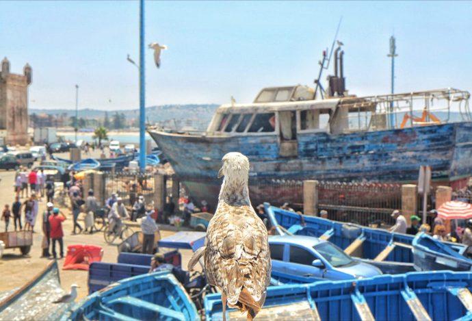 Essouira harbour - travel guide, Morocco