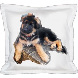 Jax Cushion
