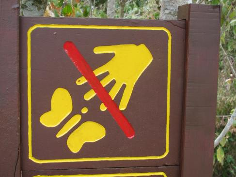 Please do not feed Twizzlers to the butterflies!