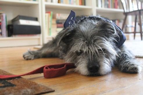 theuglyvolvo dog open letter 2