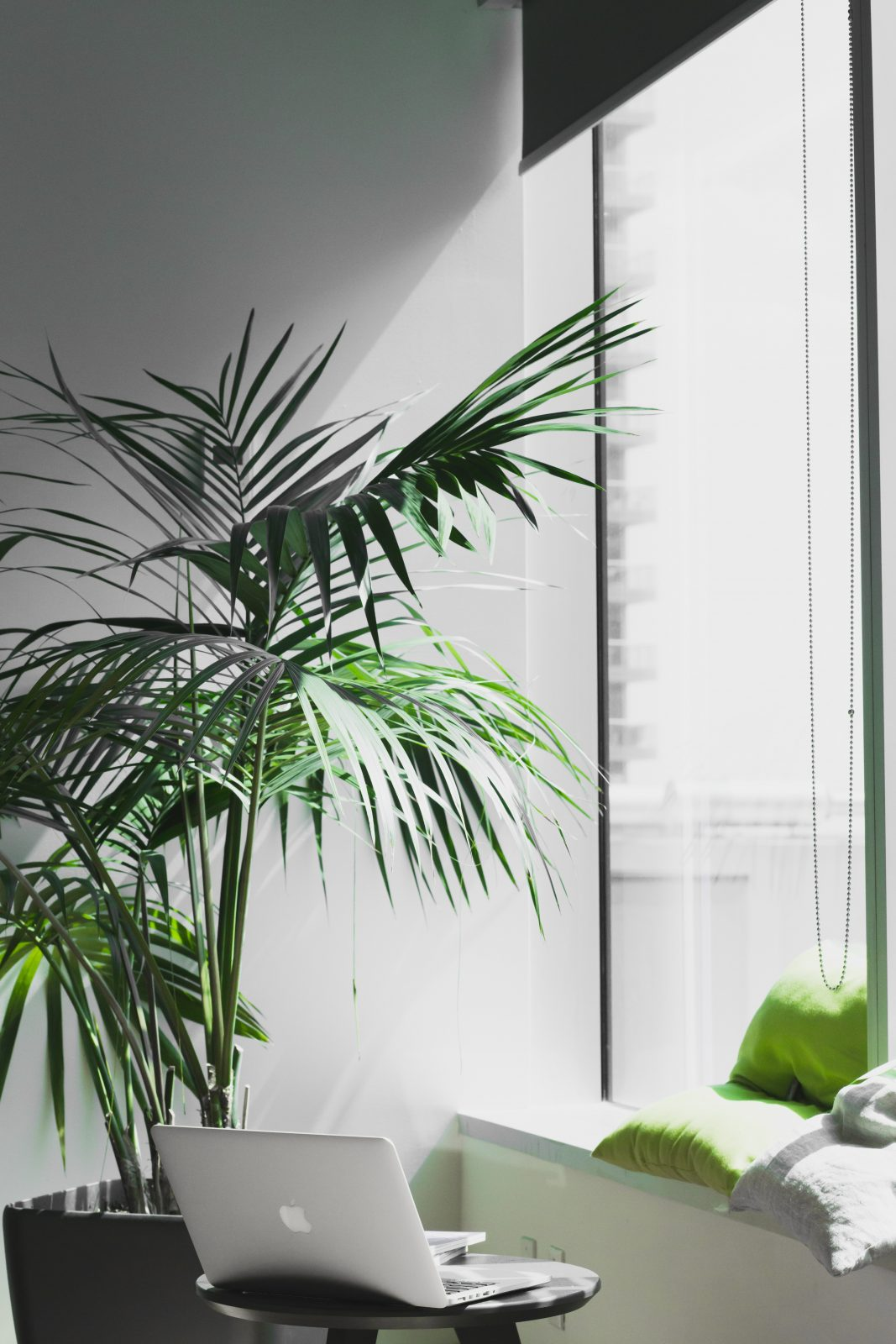 Big Plants For Living Room Stop 4 Things You Should Stop Comparing In Your Life