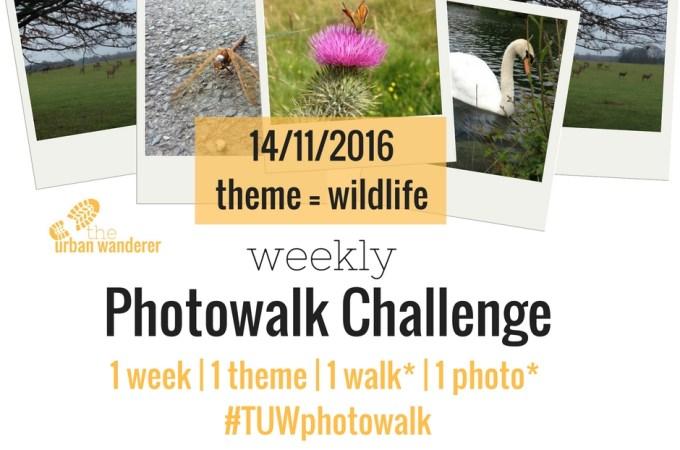 The Urban Wanderer Weekly Photowalk Challenge | #3 Wildlife