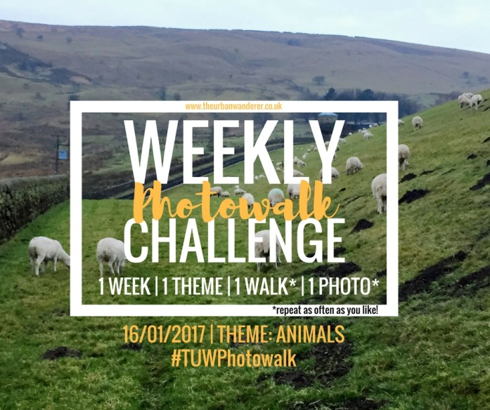The Urban Wanderer Weekly Photowalk Challenge #9 Animals | Get Outside | Photography Challenge | Explore your area | Sarah Irving The Urban Wanderer | Manchester Blogger Outdoor Blogger | #TUWPhotowalk #lookup #lookupmcr