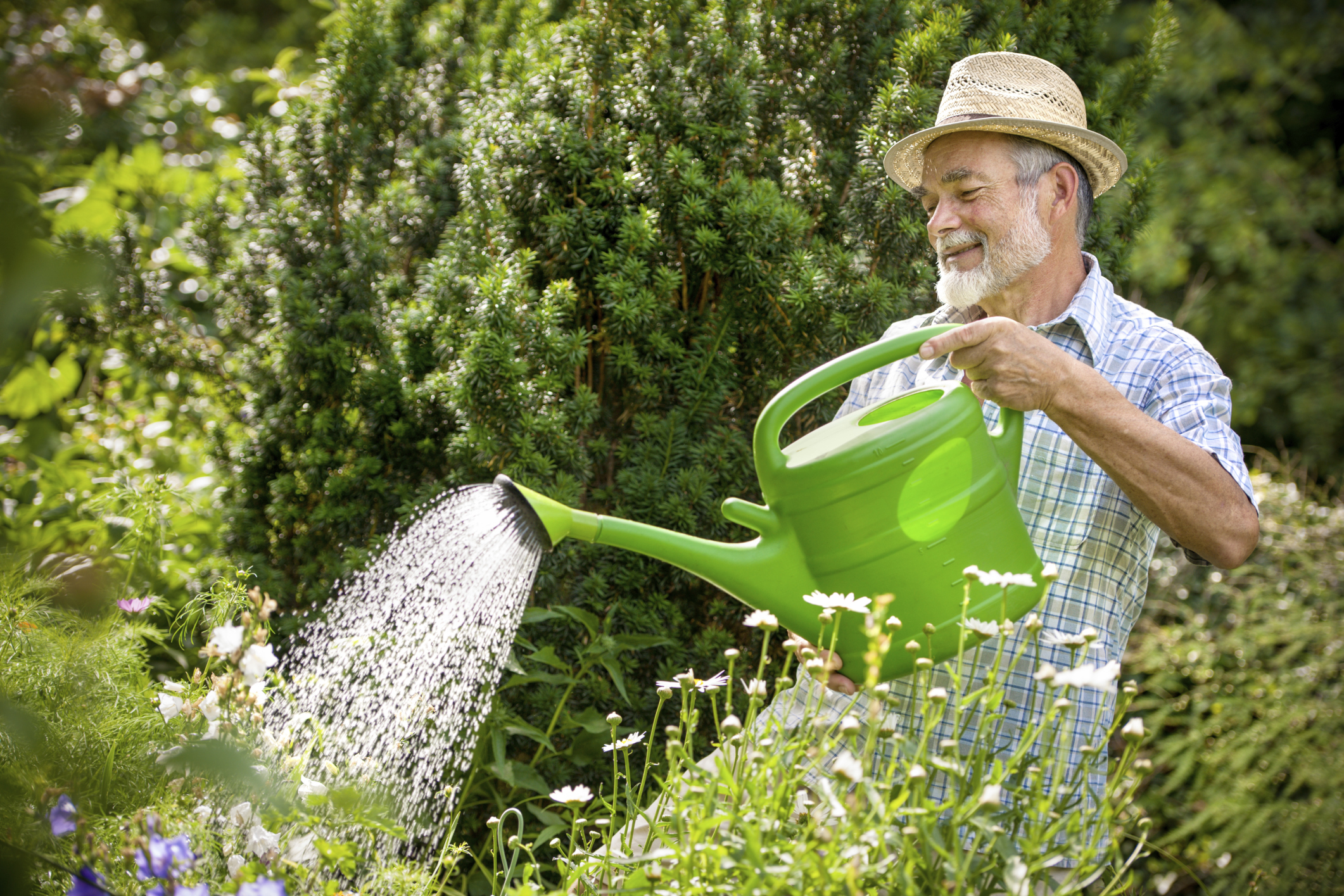 Plant Watering Cans When Should I Water My Plants The Veggie Lady