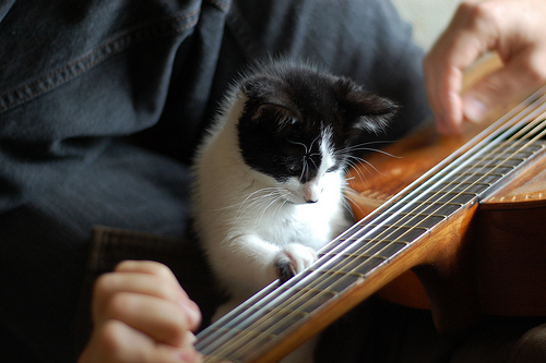 Cute Wallpaper Recycling Top 10 Images Of Cats Playing Musical Instruments