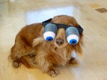 Top 10 Images of Dogs Wearing Silly Glasses