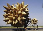 Top 10 Precariously Overloaded Bicycles