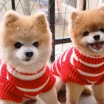 Top 10 Images of Identical Twin Animals