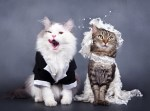 The World's Top 10 Best Images of Cats Getting Married