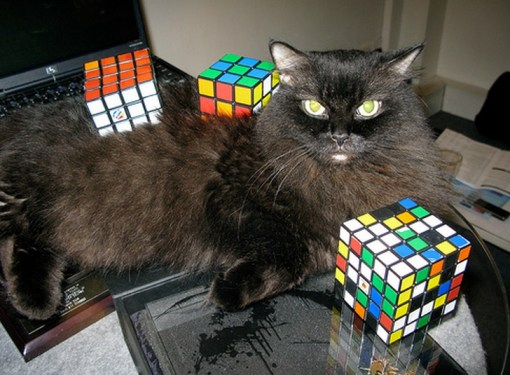 Top 10 Images of Cats Playing With Rubiks Cubes