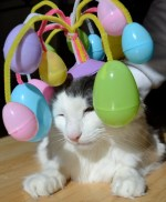 Cat with Easter Eggs