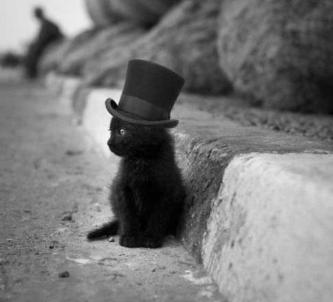 http://i0.wp.com/theverybesttop10.com/wp-content/uploads/2014/04/The-World%E2%80%99s-Top-10-Best-Images-of-Cats-in-Tiny-Hats-8.jpg?resize=486%2C440